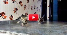 Finally! Someone Combined Kittens With Formula 1 Racing Audio–And The Result Is Hilarious! | The Animal Rescue Site Blog