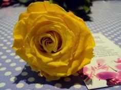 30% de réduction - code 30STAB jusqu'au 16 mars! Rubrique : Fleurs Naturelles Stabilisées sur www.artifleurs-fleurs-artificielles.com
