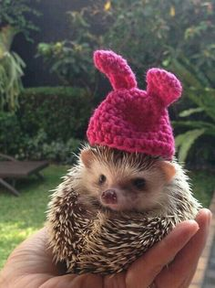 when you have a nice hat and someone mentions it and you feel nice Baby Animals Super Cute, Cute Little Animals, Cute Funny Animals, Baby Animals Pictures, Cute Animal Pictures, Animals And Pets, Funny Hedgehog, Hedgehog Pet, Cute Puppies