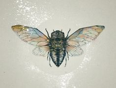 Love the muted colors in this cicada drawing