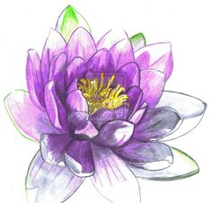 Water Lily by XeroIM. Done with pencils. Seen on Bing.