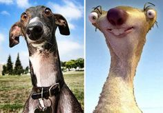 18 Dogs That Look Like Something Else, So funny