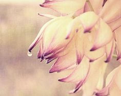 Nature Photography  Spring Photos Pastel Flower by MorganRosePhoto, $30.00