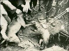 Stafford vs Badger 1930