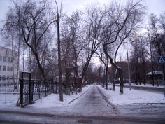 La nieve en las ramas.