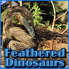 Feathered Dinosaurs Did birds evolve from the dinosaurs? Did dinosaurs have feathers? Could the dinosaurs fly? In this dynamic PPT presentation you will learn the answer to these questions and much more. More than just a series of informative slides, thi Science Lessons, Science Activities, Classroom Activities, Elementary Science, Elementary Schools, Upper Elementary, Feathered Dinosaurs, Ppt Presentation, Simple Machines