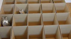 Diese süssen Kätzchen hier hüpfen durch eine Reihe von Kartons um sich fortzubewegen. Wirkt irgendwie sehr beruhigend auf mich Kätzchen im Karton-Labyrinth was first seen on Dravens Tales from the Crypt.