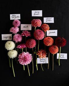 Cut Flower Garden, My Flower, Flower Farmer, Flower Quotes, Flower Aesthetic, Types Of Flowers, Garden Crafts, Pretty Flowers, Flower Decorations