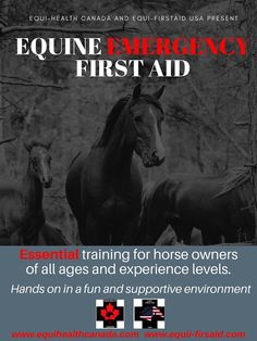 Looking for horse training courses in Canada? Turn to Equi-Health Canada! My Horse, Horses, First Aid Course, Emergency First Aid, Vital Signs, Horse Training, Sign I, Colic, Love