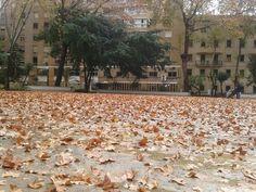Parque Maria Cristina. Otoño en Algeciras