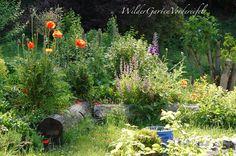 Wilder Garten Vordereifel: Disziplin im wilden Garten
