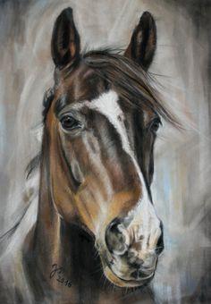 Pferdezeichnung / Pferdeportrait in Pastell ~ Horse painting / Horse portrait in pastel Jutta Pallasch ~ PASTELLBLICKE ~ TIERPORTRAITS