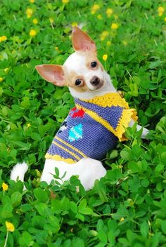 Blue Prince Chihuahua Clothes Fashion Plaid Crochet Dog by myknitt Chihuahua Clothes, Cute Chihuahua, Chihuahua Puppies, Cute Puppies, Cute Dogs, Crochet Dog Clothes, Puppies And Kitties, Doggies, Dog Sweaters