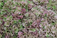 purple 'magical opal classic' hydrangea at New Covent Garden Flower Market - July 2015