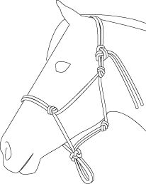 how to make a pony rope halter