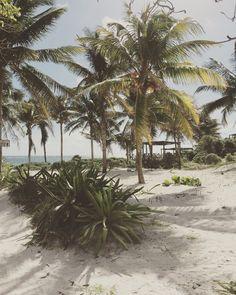 Beach Mexico © stoptaste.com / Dennis Lorenz  In Mexiko findet jeder seinen Lieblingsplatz, ob an einer der paradiesischen Küsten, zwischen alten Maya-Ruinen versteckt im Dschungel oder in einer der urbanen Metropolen wie Mexiko City. Erfahre mehr auf www.stoptaste.com