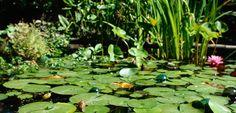 Creating a garden pond - Editor's picks - Gardening - New Zealand Woman's Weekly