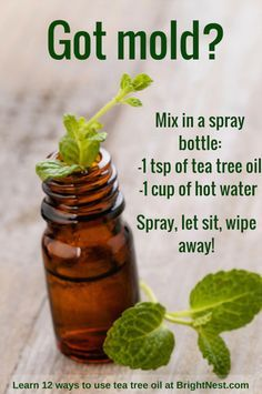 Tea tree oil can do anything from kill mold to help asthma! Learn 12 ways to use it at BrightNest Tea tree oil can do anything from kill mold to help asthma! Learn 12 ways to use it at BrightNest Household Cleaning Tips, Homemade Cleaning Products, House Cleaning Tips, Green Cleaning, Natural Cleaning Products, Spring Cleaning, Cleaning Hacks, Cleaning Solutions, Household Cleaners