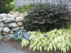 shade garden combination with japanese forest grass (hakone grass) Contemporary Landscape, Landscape Design, Garden Design, Shade Garden Plants, Garden Grass, Forest Garden, Outdoor Plants, Outdoor Gardens, Japanese Plants