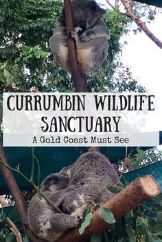 Currumbin Wildlife Sanctuary shows off all our Australian animals right on the Gold Coast. Here's how to hold a koala or feed a kangaroo. Melbourne, Sydney, Brisbane, Australia Tourism, Visit Australia, Australia Holidays, Australia Trip, Gold Coast Australia, Western Australia