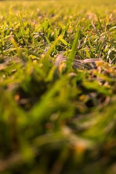 Green Grasses In-close Up Photography · Free Stock Photo Garden Loppers, Garden Wagon, Garden Gifts, Garden Leave, Haunted House Party, Halloween Haunted Houses, Organic Horticulture, Organic Gardening, Summer Quotes Instagram