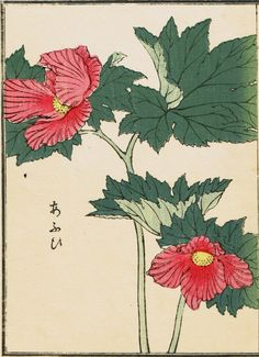 "Japanese antique woodblock print Kōno Bairei ""Hollyhock"""