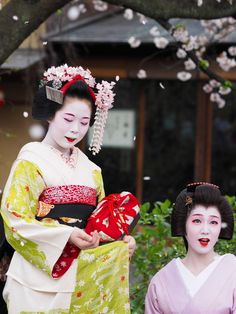 芸妓さんと舞妓さんのブログ (April 2015: geiko Tsunemomo and maiko Komako under...)