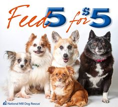 DID YOU KNOW? $5 feeds 5 puppy mill dogs! Spare as little as $5 a month and become an angel for the dogs. Click here: http://milldogrescue.org/nmdr-angel/