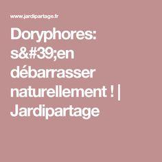 Doryphores: s'en débarrasser naturellement ! | Jardipartage
