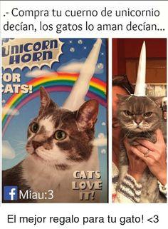 Resultado de imagen para meme gatos