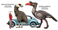 Terror birds Brontornis burmeisteri Kelenken guillermoi Titanis