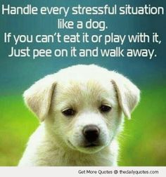 cute sayings with animals | Cute Animal Quotes and Sayings