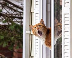That's not a bird, that's a pterodactyl! @BionicBasil @pmcatlady9 @janeface15 @ShadowsWhiskers MT @takinoeri #cats
