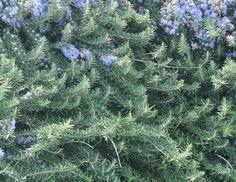 Le erbe aromatiche ti inebrieranno con il loro profumo. Fermati un attimo e cogli questa opportunità. Sono tue amiche. Annusale. Ti sentirai meglio