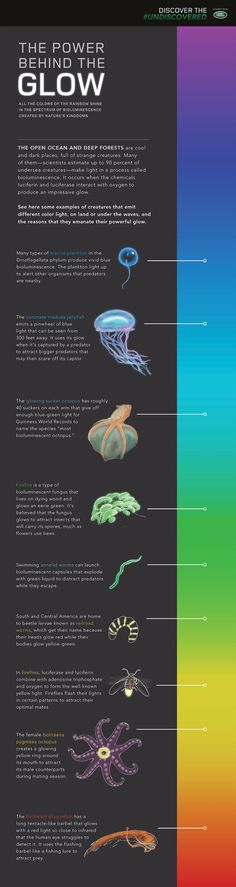 [Infographic] You Need to See This Bioluminescent Fungus