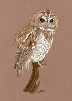 ARTFINDER: Patience by Cate Wetherall - Tawny Owl waiting for lunch!  Giclee print from an original painting of pastels on Pastelmat