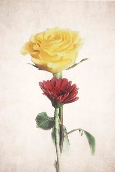 Lost In A Dream - Neutral Background by Garvin Hunter Farm Art, Floral Prints, Art Prints, Neutral, Lost, Floral Paintings, Artwork, Photography, Art Impressions
