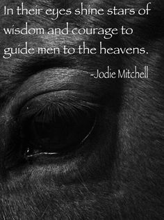 In their eyes shine stars of wisdom and courage to guide men to the heavens. #horsequotes