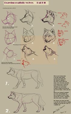Drawing realistic wolves II by Yellow-eyes on deviantART