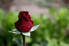 the beauty of flowers - Google Search