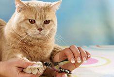 5 Ways to Groom Your Cat