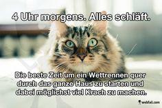 Katzenlogik - Fun Bild | Webfail - Fail Bilder und Fail Videos