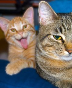 """<p>There's always someone who wants to spoil a picture.</p><p><b><a href=""""http://www.facebook.com/share.php?u=mom.me/pets/cats/27555-cat-photobombs/"""">Share This on Facebook?</a></b></p><p>Image via <a href=""""http://imgur.com/gallery/3P15b"""">Imgur</a></p>"""