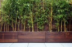 bamboo privacy screen in mahogany planters