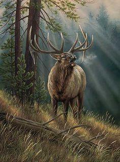 Cold Morning Bugle Wrapped Canvas Art features a bull elk bugling Wildlife Paintings, Wildlife Art, Animal Paintings, Animal Drawings, Elk Pictures, Bull Elk, Hunting Art, Deer Art, Outdoor Art
