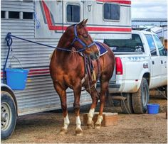 Six Tips To Get Ready for Show Season!