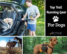 Top Trail Running Gear for Dogs
