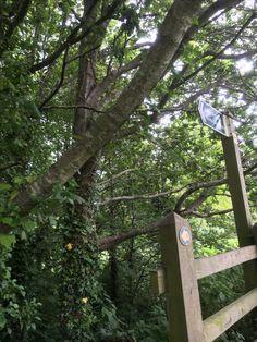 Devon, Bird, Outdoor Decor, House, Home Decor, Homemade Home Decor, Home, Haus, Birds