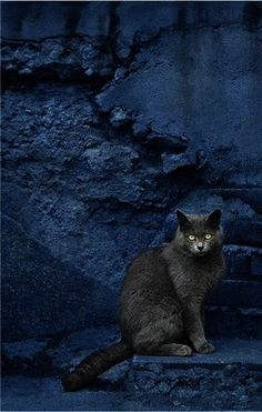 love the contrast between the grey cat and blue background