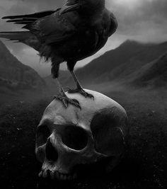 dark skull my photos Macabre crow morbidintoxication Raven Pictures, Dark Pictures, Horror Pictures, Dark Images, Dark Gothic, Gothic Art, Corvo Tattoo, La Danse Macabre, Quoth The Raven